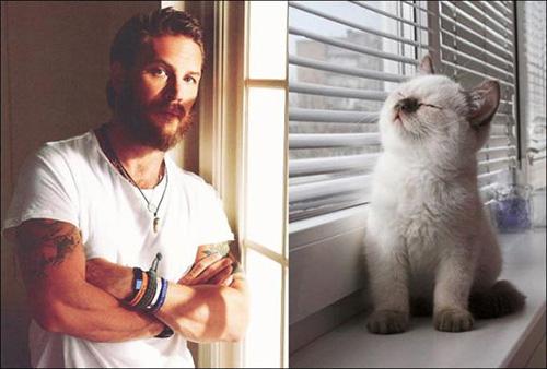 Ảnh vui: mèo tạo dáng như các nam tài tử Hollywood (10)