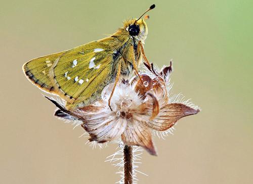 Lung linh hoa, bướm của Simone Noll (7)