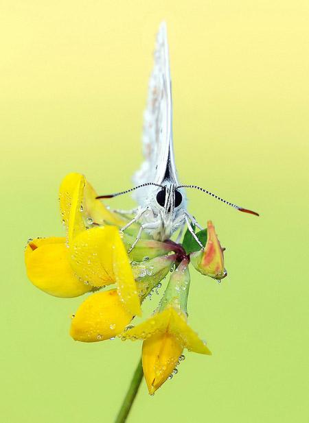 Lung linh hoa, bướm của Simone Noll (6)