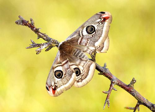 Lung linh hoa, bướm của Simone Noll (5)