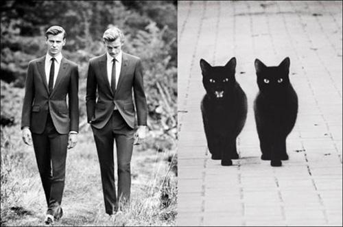 Ảnh vui: mèo tạo dáng như các nam tài tử Hollywood (7)