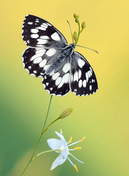 Lung linh hoa, bướm của Simone Noll (4)