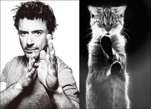 Ảnh vui: mèo tạo dáng như các nam tài tử Hollywood (6)