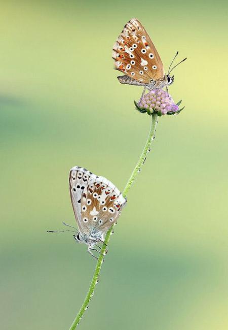 Lung linh hoa, bướm của Simone Noll (3)