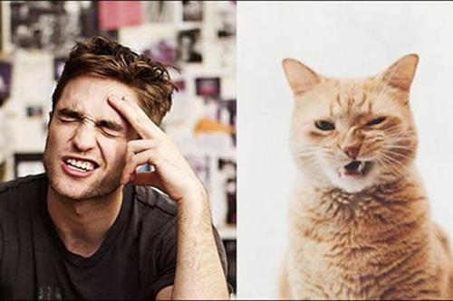 Ảnh vui: mèo tạo dáng như các nam tài tử Hollywood (5)