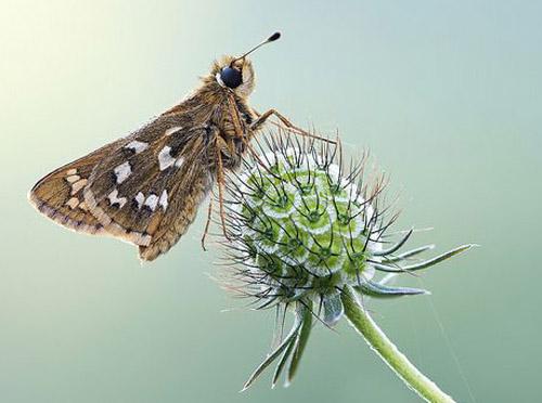 Lung linh hoa, bướm của Simone Noll (1)