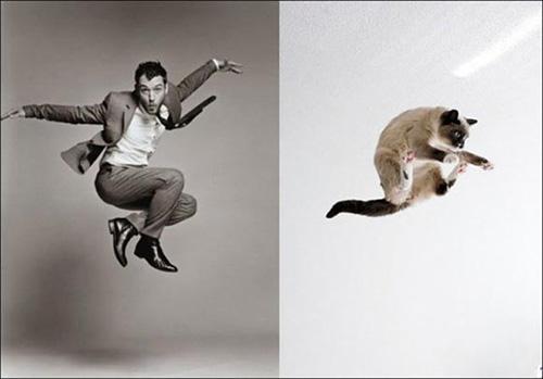 Ảnh vui: mèo tạo dáng như các nam tài tử Hollywood (2)