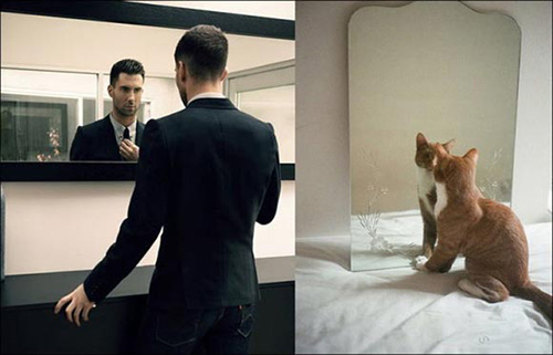 Ảnh vui: mèo tạo dáng như các nam tài tử Hollywood (1)
