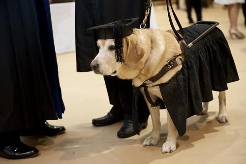 Chú chó được nhận bằng thạc sĩ của chính phủ Hoa Kỳ