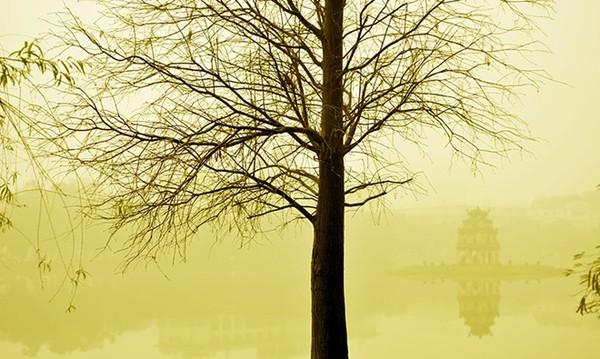 'Sương mù', ảnh Lâm Phúc.