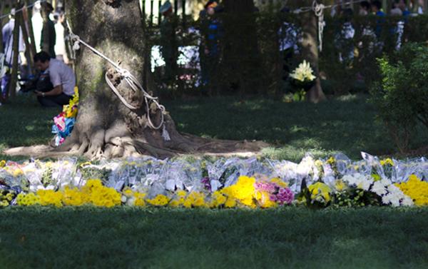Những hàng hoa trong sân nhà Đại tướng vì thế cũng càng nhiều lên