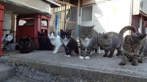 Độc đáo đảo của loài mèo ở Nhật Bản