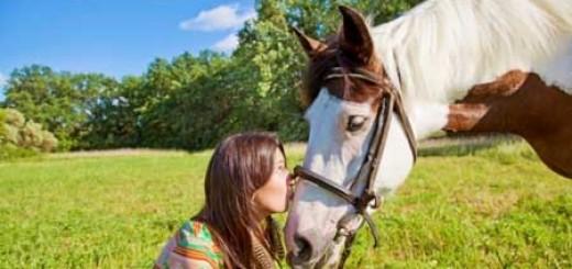Những điều thú vị về ngựa