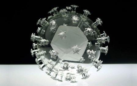 Virus HPV (Human Papilloma Virus) - Virus gây u nhú ở người