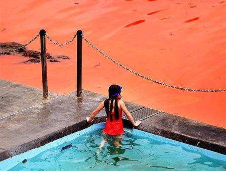 Sự sinh sôi, nảy nở hiếm gặp của tảo đã khiến nước ở bãi biển Bondi chuyển thành màu đỏ bất thường vào năm 2012.