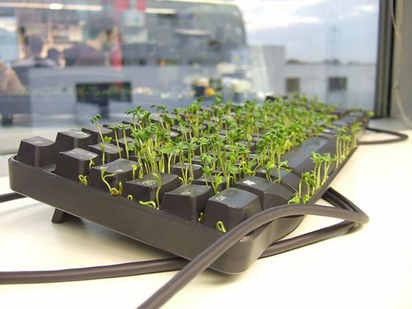 """Trồng một """"vườn cỏ"""" mini trong bàn phím của đồng nghiệp."""