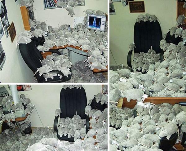Nhét đầy văn phòng bằng chuột nhồi bông.