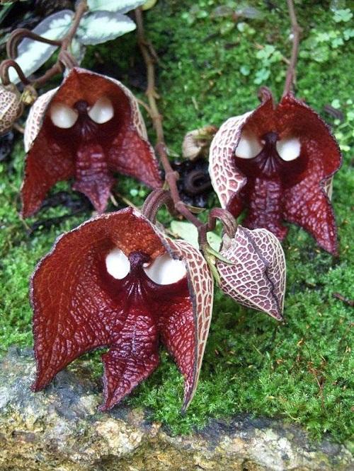 Thú vị những loài hoa hình dáng siêu độc