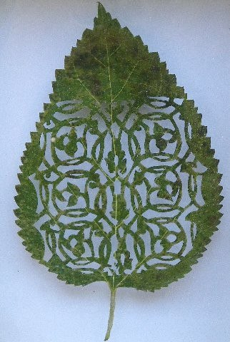 Đỉnh cao nghệ thuật cắt hình trên lá