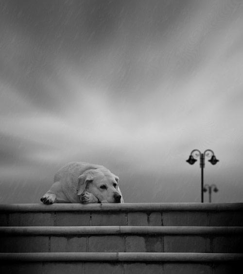 Khi động vật buồn