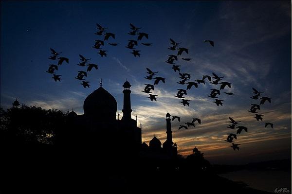 Taj Mahal Silhouette India By Prateek Raghav