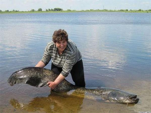 Một phụ nữ Nga vừa câu được con cá trê khổng lồ nặng tới 50kg