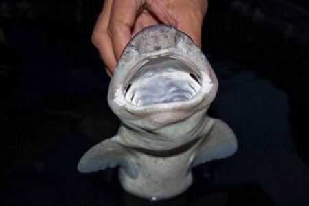 Một con cá mập được phát hiện khi nhóm thám hiểm nghiên cứu đảo Luzon và vùng biển xung quanh trong thời gian từ 26/4-8/6.
