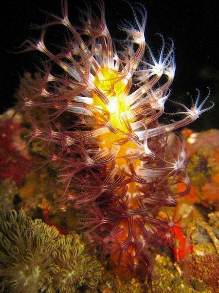 Các loài thực vật biển mới.
