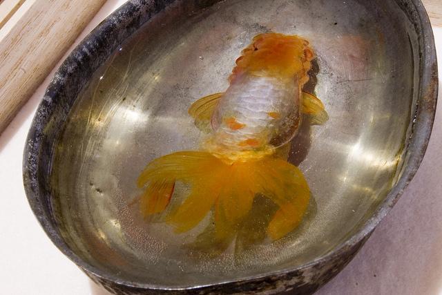 Kinh ngạc trước kiệt tác cá vàng 3D của Riusuke Fukahori