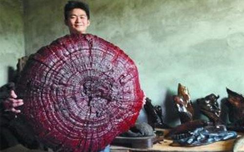 Nấm linh chi có đường kính 92 cm. Ảnh: Shanghaiist