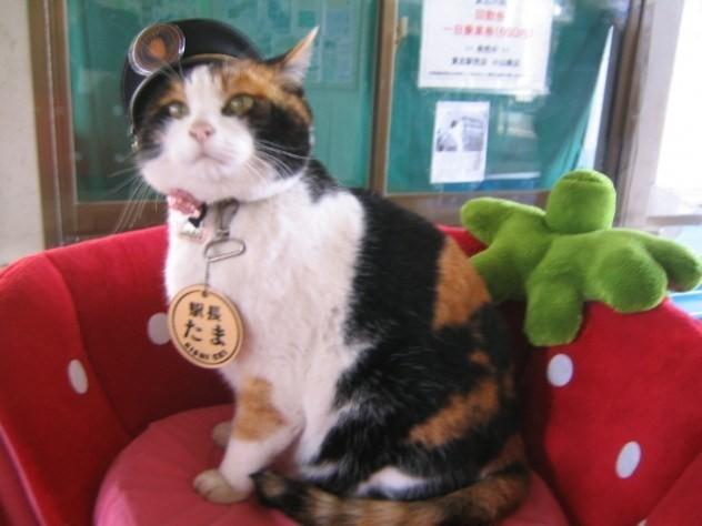 Mèo Tama mang về hơn 10 triệu USD cho nhà ga Kishi. Ảnh: blogspot.com