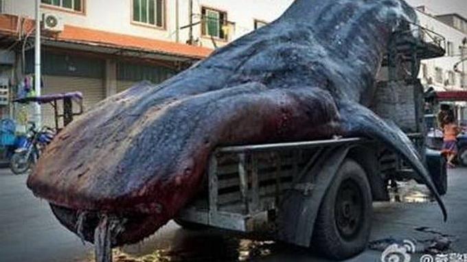 Buôn bán cá mập voi là hành vi phạm pháp ở Trung Quốc và các nước - Ảnh: Independent