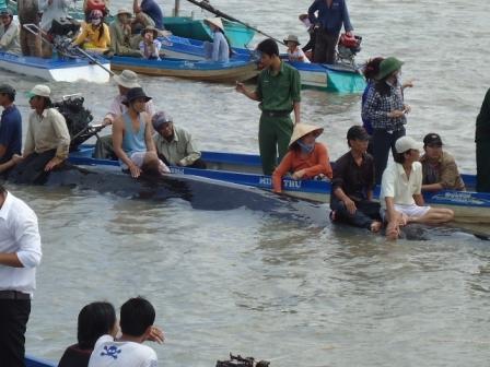 Ngư dân đến xem cá lạ