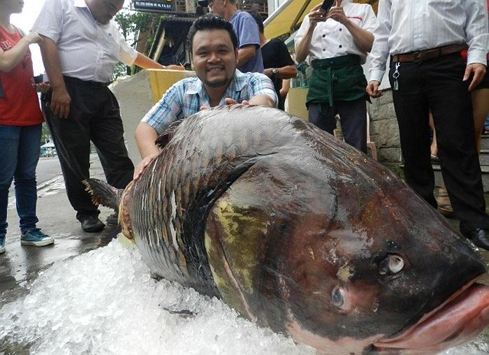 Chúng có mặt ở sông Mê Kông và lưu vực sông Chao Phraya ở Đông Dương. Các con sông trên địa phận Thái Lan có mặt khá nhiều loài chép Xiêm khổng lồ, nên thu hút các cần thủ đến từ khắp thế giới.