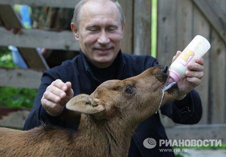 Vào tháng 6/2010, ông Putin đã tới thăm công viên quốc gia Losinyy Ostrov gần Mátxcơva và chăm sóc một con nai giống hệt một chuyên gia động vật thực thụ.
