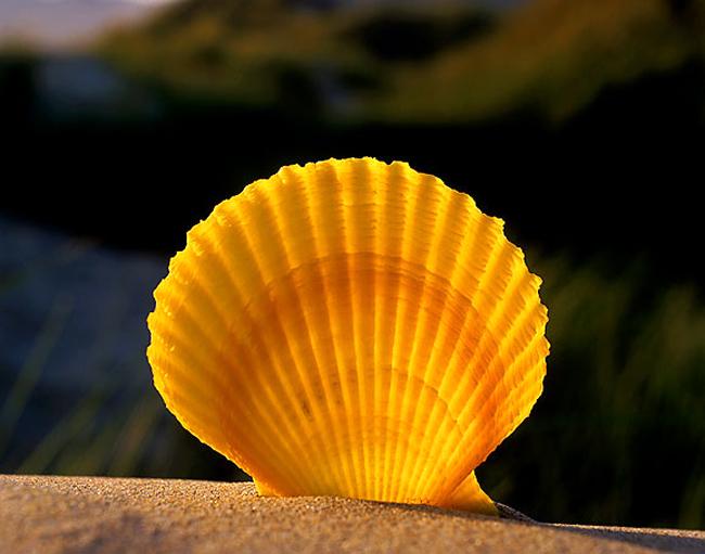 Những vỏ sò dạt dào tình yêu của biển