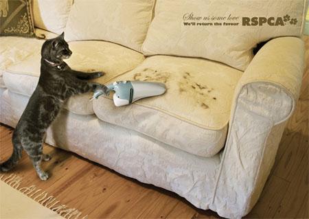 Đến mèo cũng phải viện trợ đến máy hút bụi siêu việt RSPCA để phi tang dấu vết.