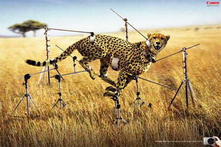 Tiếp tục là quảng cáo của máy ảnh Canon, tốc độ bắt ảnh còn nhanh hơn cả báo Gepard chạy.