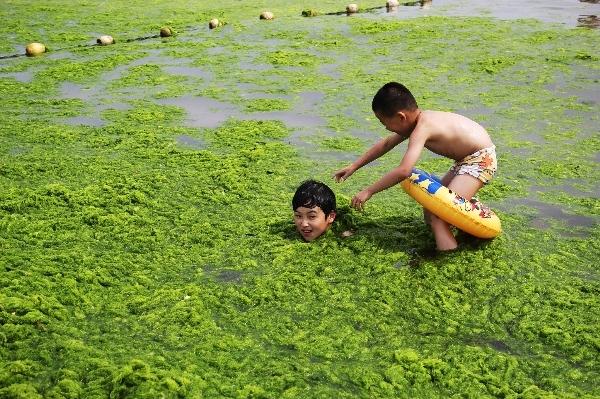 Bãi biển tảo xanh độc đáo của Trung Quốc