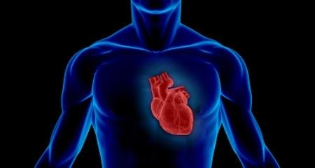 Trái tim con người