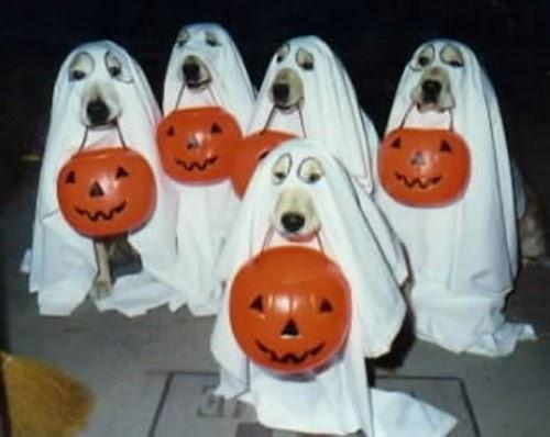 Những bức ảnh trang trí Halloween hài hước