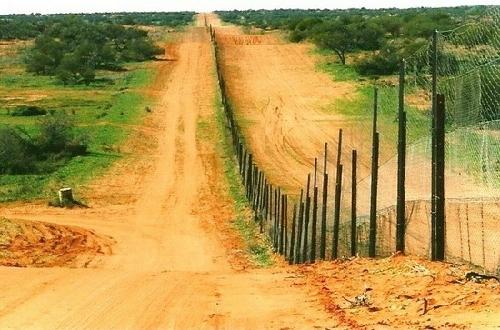 Australia đã kỳ công xây dựng một hàng rào dài để bảo vệ gia súc khỏi sự tấn công của loài chó hoang. Ảnh: Au
