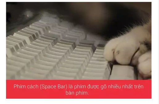 Phím cách là phím được gõ nhiều nhất trên bàn phím