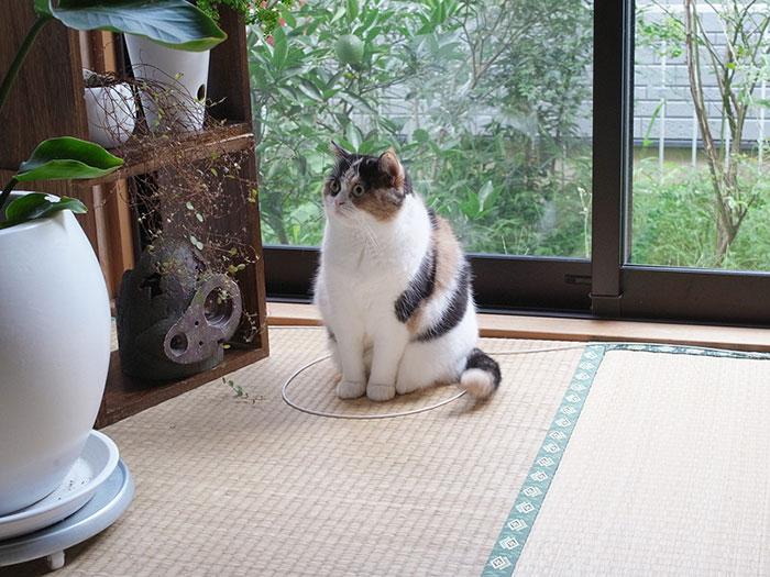 [Nghiên cứu vui] mèo bị hấp dẫn bởi vòng tròn