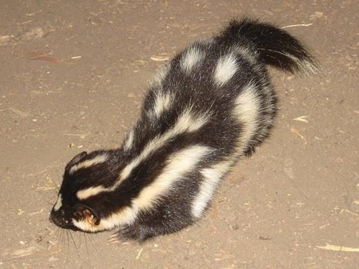 Một vài động vật có thể hoãn ngày sinh nở của mình tận mấy tháng sau đó
