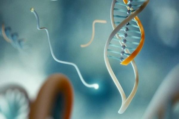 Những điều thú vị về ADN