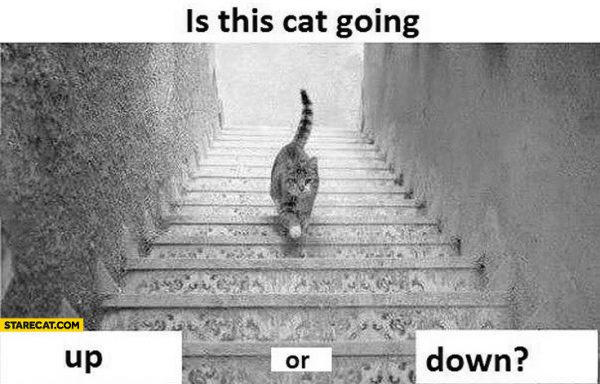 is-this-cat-going-up-or-down