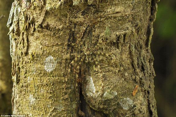 Thật khó có thể phát hiện ra con nhện Lichen này tại công viên quốc gia Erawan, Thái Lan nếu bạn không nhìn kỹ