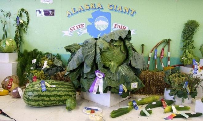 Xứ sở của những loài rau củ khổng lồ