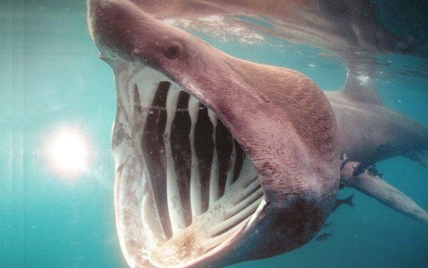 """Cá mập phơi nắng- 7 """"quái vật"""" nhìn đáng sợ nhưng gần như vô hại"""